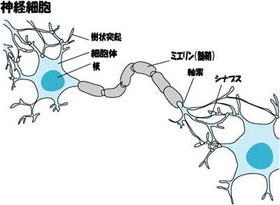 神経細胞.jpg