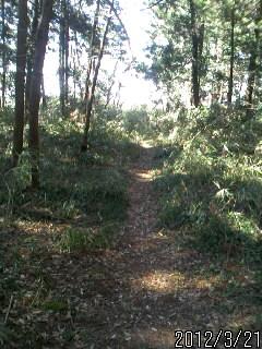 思川への道