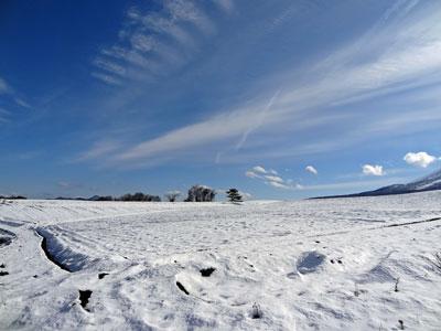 11月30日初雪キャベツ畑
