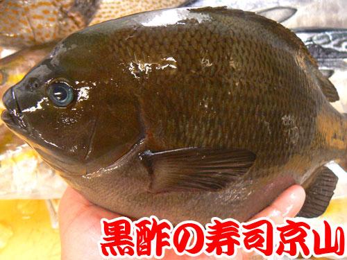 江戸川区 寿司 出前 瑞江.jpg