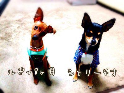 2014-08-15_400.jpg