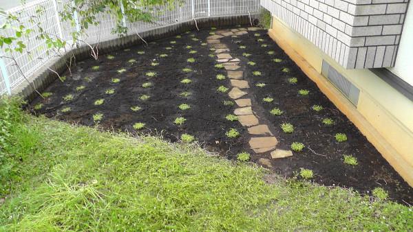 植えた直後のイワダレソウ(クラピアS1)
