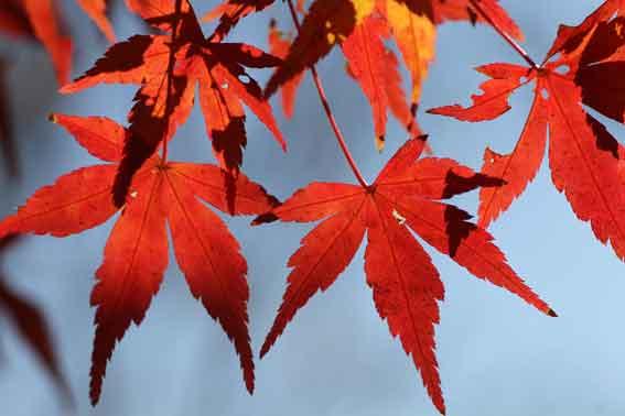 神山森林公園の紅葉-1♪