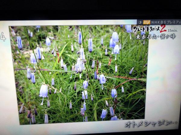 テレビ画面花