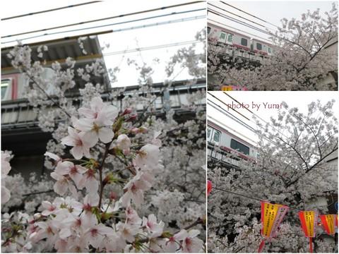 お花見2013中目黒編5.jpg