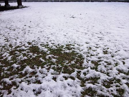 今年もクラピアに雪が積もりました2