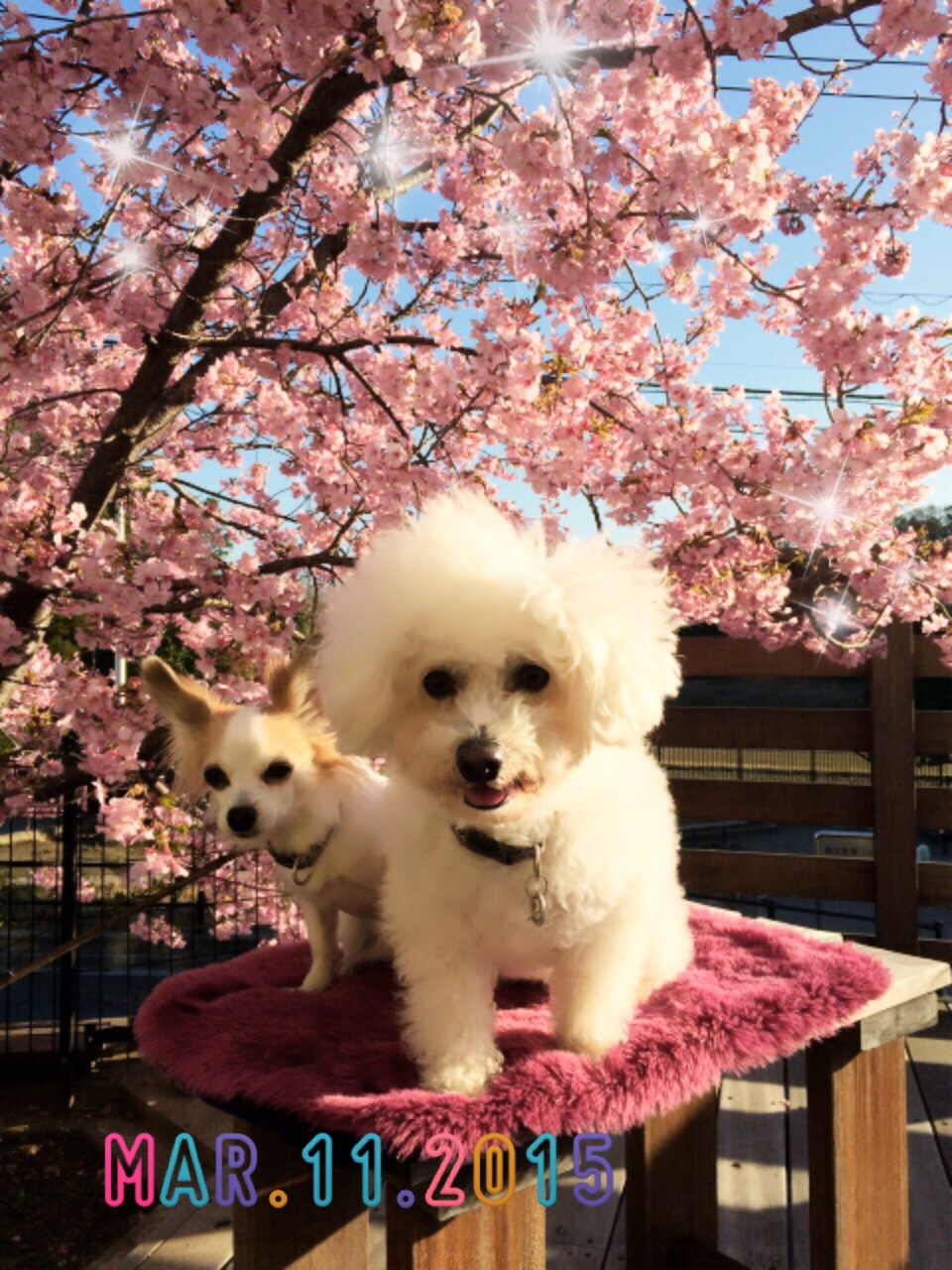 2wanと桜