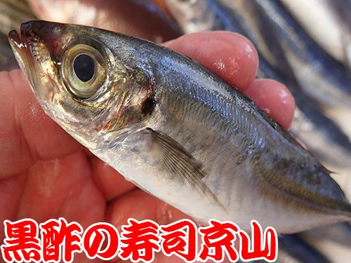 江戸川区南篠崎まで新鮮美味しいお寿司をお届けします