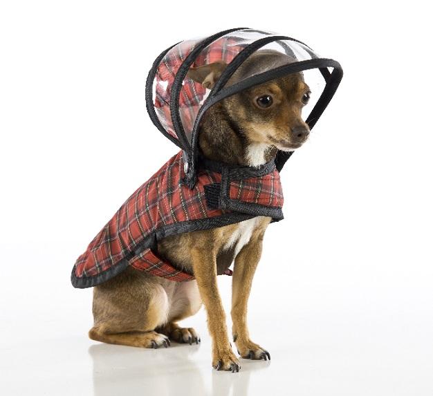 犬 レインコート 散歩
