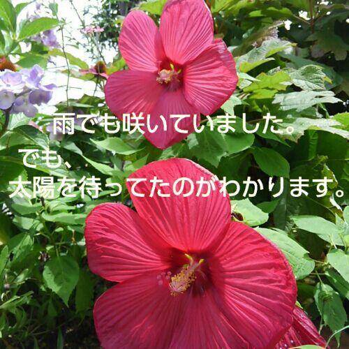 rblog-20180708110540-00.jpg