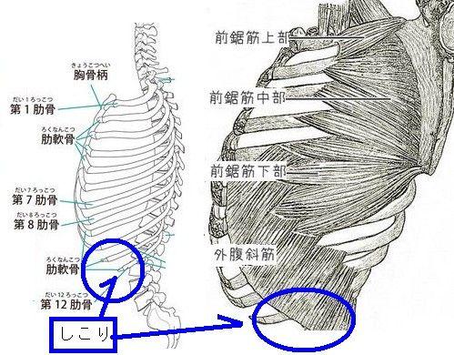 脇腹 痛い の 右 肋骨 下
