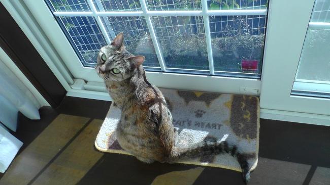 窓際で日向ぼっこする猫