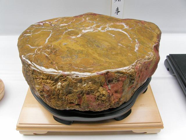錦珪化木「大秋川産」 重量40キロ以上!
