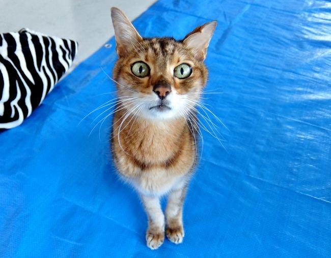 猫 ねこ リンパ腫 消化器型 最後 食欲 ブログ