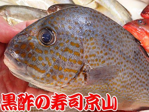 コロダイ 胡廬鯛 寿司