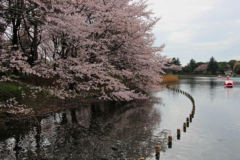 2.桜橋から.JPG