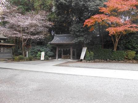 3四季桜とモミジ.JPG