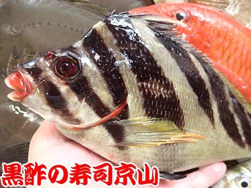 寿司 出前 江東区 牡丹