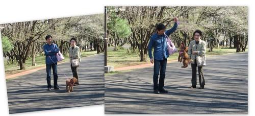 お花見樹林公園20142.jpg