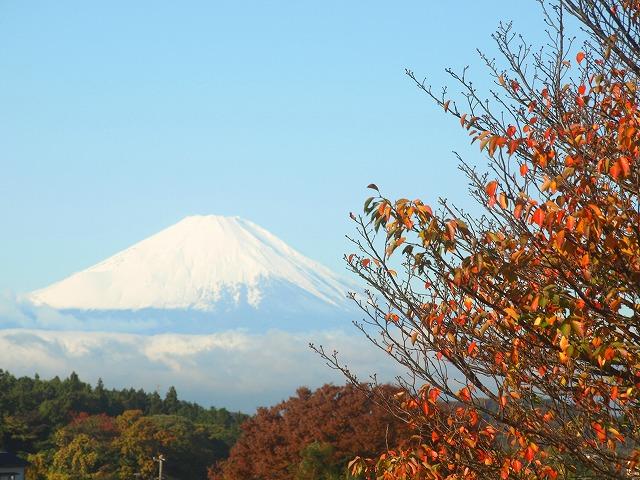 H26.11-富士山と紅葉.jpg