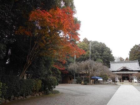 5モミジと枝垂桜.JPG