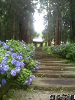 大中寺の門1