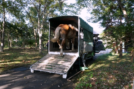 馬運車 Horse trailer