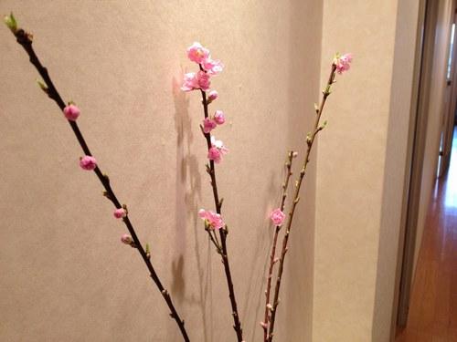 23月8日桃の花5001.jpg