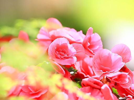 2花.jpg