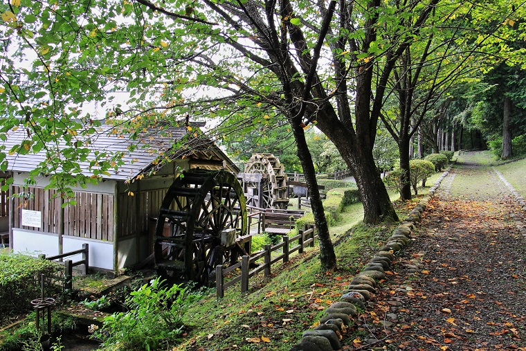 1.杉並木公園の小路.JPG