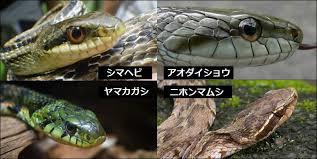 ヤマカガシとほかのヘビ.png