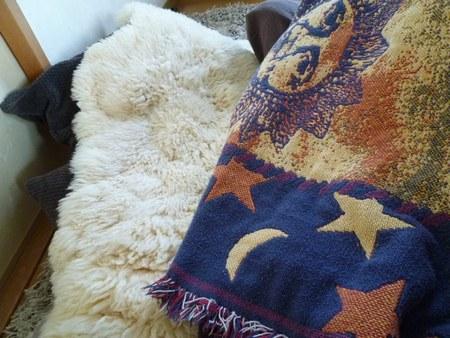2冬炬燵 羊毛ラグ1450.jpg