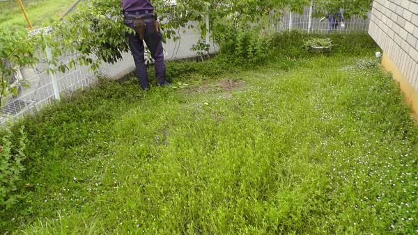 暴走車に突っ込まれた庭の補修工事