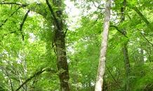 oda-nature17.jpg