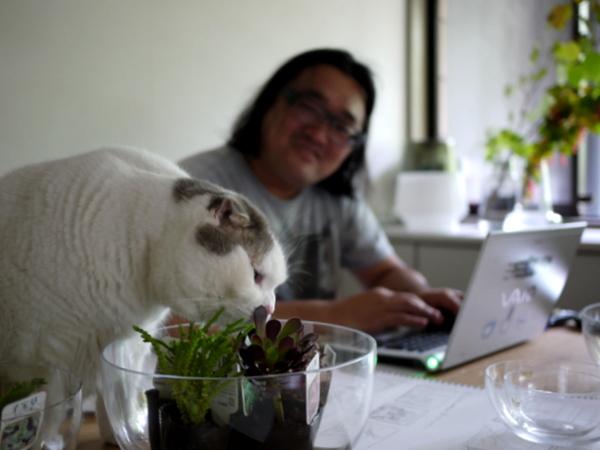 タミは家中の植物を食べ尽くす勢い。でも猫草は食べない。何故!?.JPG