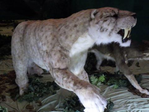 メガ恐竜展2017巨大化の謎にせまる8 スミロドンの生体復元模型