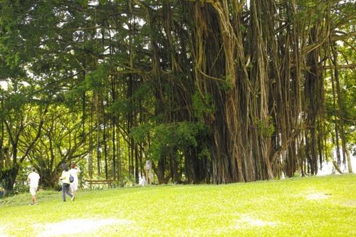 巨木2.JPG