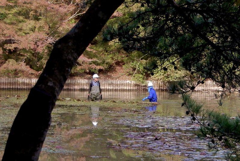 水草刈り7
