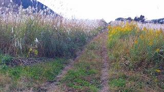 耕作放棄地2.jpg