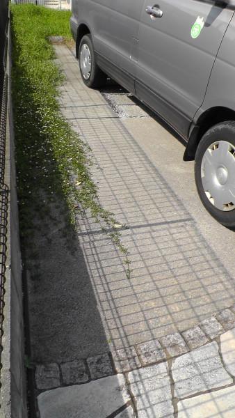 駐車場にはびこるイワダレソウ、クラピアS1
