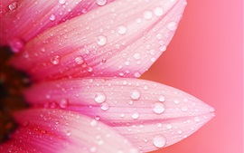 Pink-flower-close-up-petals-dew-water-drops-blur-background_s