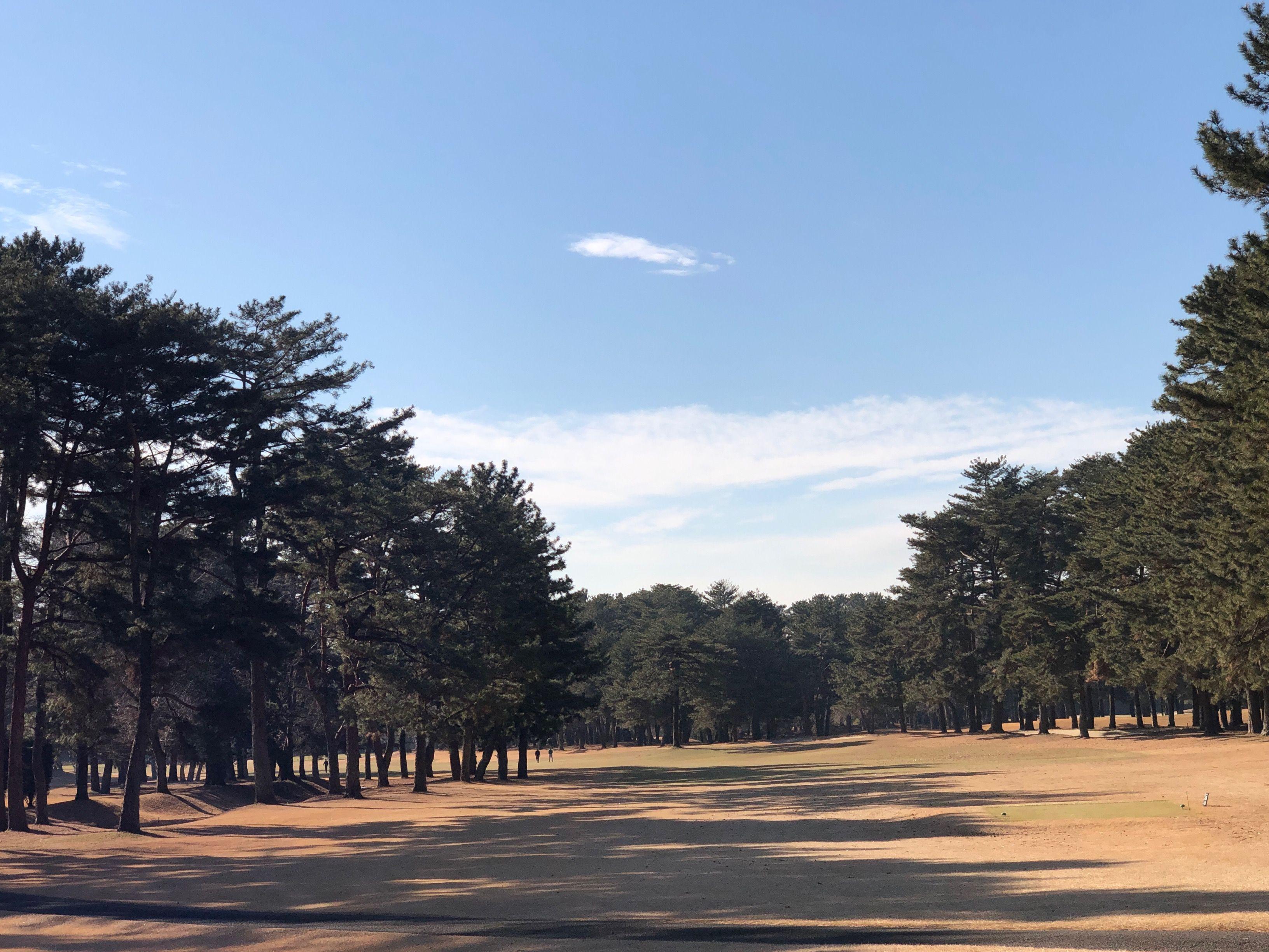 8d5ea0576a9d5 よく読まれている記事一覧 | レディスゴルファーのゴルフ奮闘記 - 楽天ブログ