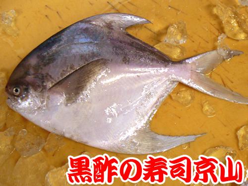 古石場 寿司 出前 江東区.jpg