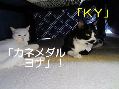 KYカネメダルヨナ.jpg