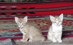 ラムで生まれた子猫たち