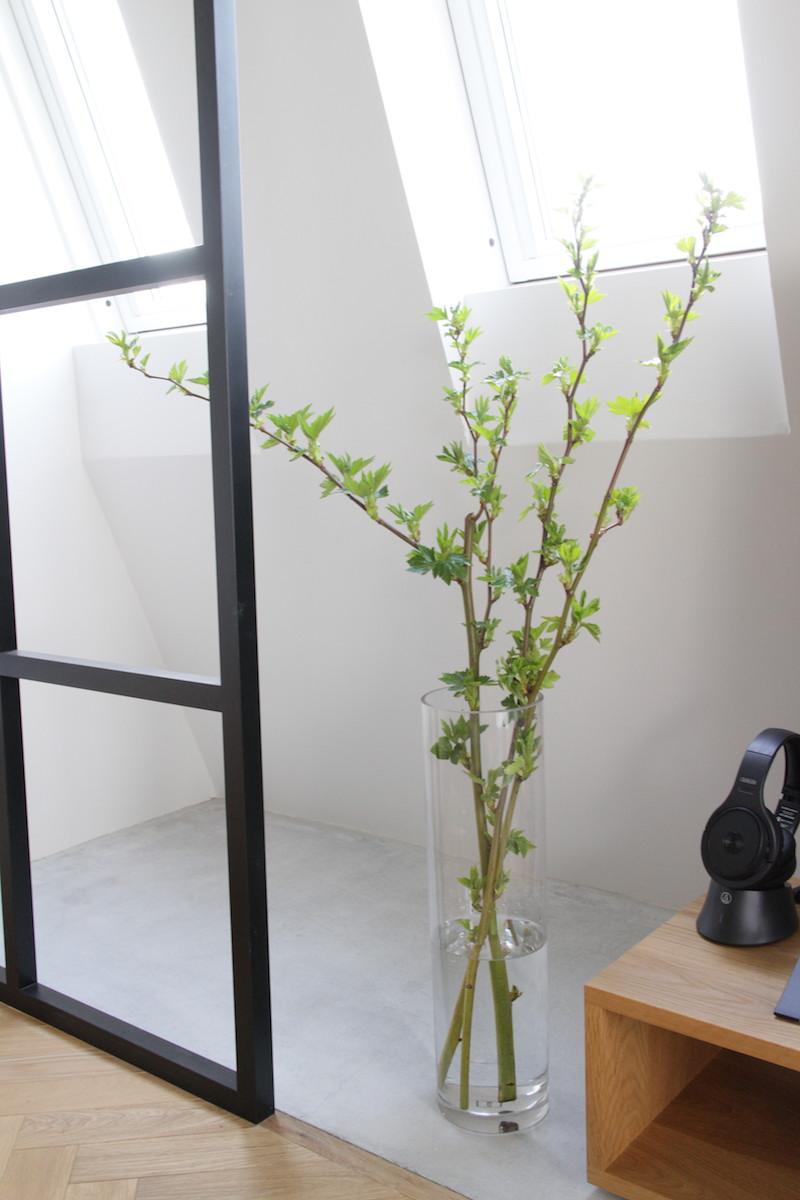 木苺1.JPG