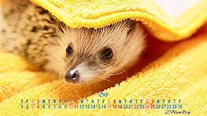 ハリネズミカレンダー