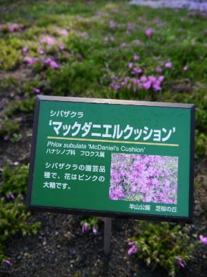 羊山公園8.JPG