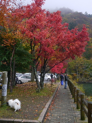 2012日光ハイキング1.JPG