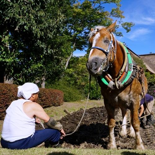 馬とひと休み